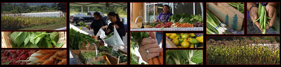 Nisqually Indian Tribe :: Community Garden Program